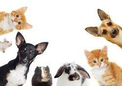 Haustiere Allergie - Luftreiniger hilft