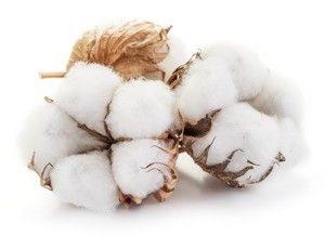 Bio Baumwolle für gut verträgliche Babykleidung