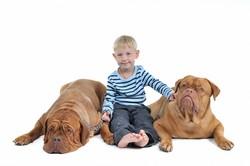 Bringe deinem Kind den Umgang mit Haustieren bei